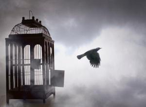 پرنده آزادی